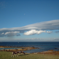 bontebok-at-buffels-bay